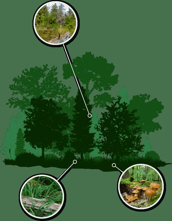 Waldgrafik Vorhaben