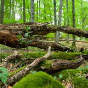 Besonderheiten bei Flächen von ThüringenForst
