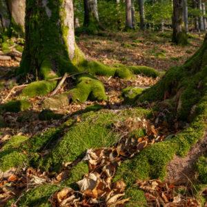 Welche Thüringer Waldgebiete gehören dazu?